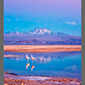 image of flamingoes on salt lake in Atacama Desert, Chile